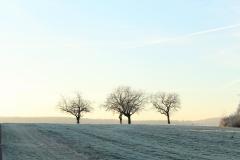 Stilllebenfotografie nach Tillmans
